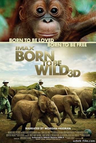Смотреть и скачать фильмы онлайн в хорошем качестве бесплатно - 1bf8b